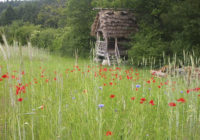 Feldflorareservat Schlangenbad-Hausen