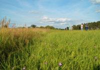 Naturschutzgroßprojekt Nuthe-Nieplitz-Niederung