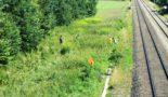 Integration und Landschaftspflege – das Springkrautprojekt im Landkreis Ravensburg
