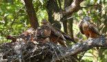 Rotmilan – Land zum Leben